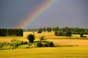 rainbow and yellows 2 by samuelvincent