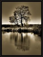 A lonely tree... by jeremi12