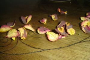 rose petals1 by deadfearie-stock