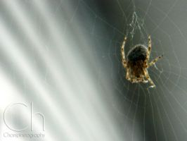 Spider by Champineography