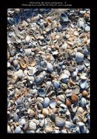 shells by priesteres-stock