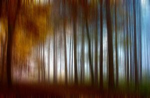 Abstract Autumn Forest by ChiaraLily9