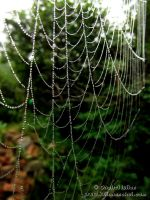 Spider Web 1 by Revolt666