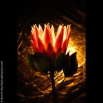 golden flower by tpics