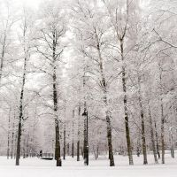 the white forest by raido-ehwaz