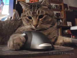 Cat and Mouse by TLBKlaus