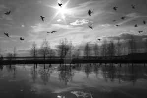 Birds of Freedom adorn the sky by ObscuredStone