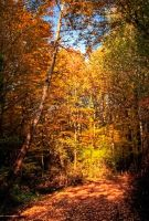 Colors of Autum by Toghar