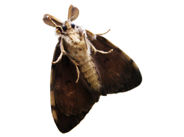 Moth photo render....STOCK! by Capukat