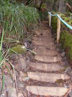 Stairs Through Woods 11 by Gracies-Stock