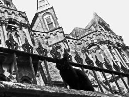 Black cat, Gothic house by katmary