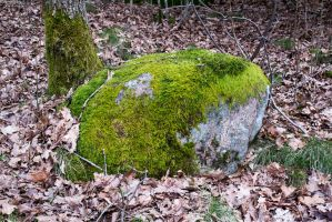 Stone III - Stock Photo by KarvinenStock