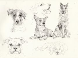 Doggies by ALEXAst