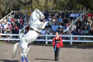 Lipizzaner Stallions 14 by Lauren-Lee