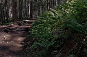 Bracken Path by ZuzkaSlaninka
