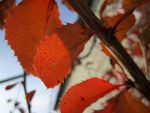 Autumn leaves by Polunoch