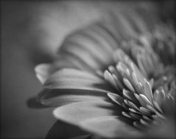 Openness: Vulnerability and Courage by Image-heart