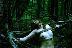 forest bondage by calvato