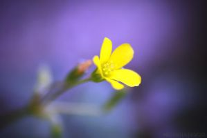 Yellow and Purple by Michaella-Designs