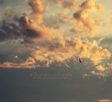 like birds in the sky. by jessmarie