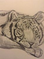 Tiger by Superspaud