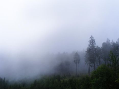 fog1 by compot-stock
