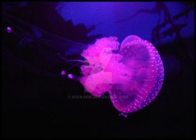 Jelly Dance VII by rockgem
