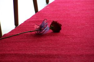 Dropped rose by Brianetta
