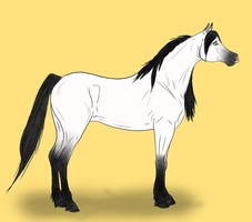 Silver-Brooke-Stable's mare - sold by HeartOfStoneRescue