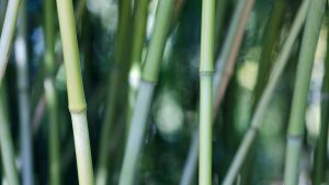 Nawak Bamboo Wall 2 by Pierre-Lagarde