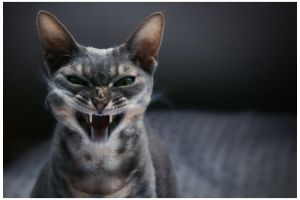 Mad cat by Saure