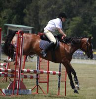 STOCK Showjumping 435 by aussiegal7