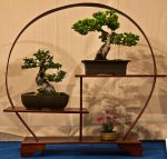 Bonsai by antmoore
