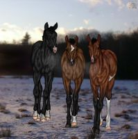 Triple Vision by CubanacanWarmbloods