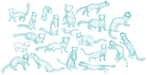 Stoat Gestures 8/9/13 by Paleclaw