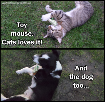 Facts about cats and dogs #1 by KillerSandy