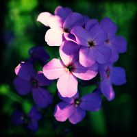 Lomo Flower by techunit