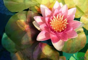 Waterlily in Pink with Shade by Tackon