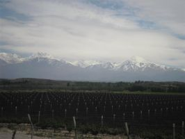 vines and mountains by Kalosys-stock