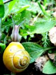 Old picture: snail by chaosqueen122