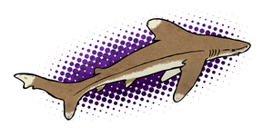 Shark Week: Oceanic Whitetip mk. 2 by KaiserWilliams