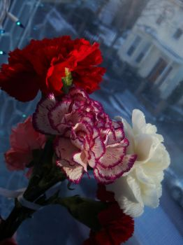 Carnations II by midnite-silver