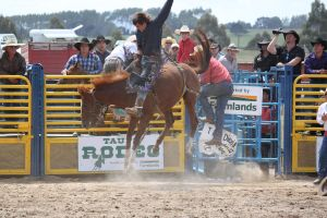Taupo Rodeo 137 by Sooty-Bunnie