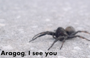 I see you Aragog by Iva-Inkling
