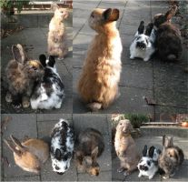 My bunny collection: Tripple Bunnies by Myskullcabinet
