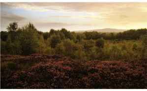 The bog is stunning by younghappy