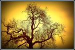 Tree of... by YannosGATO