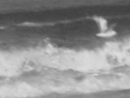 Closeup Waves with birds by ghostman0n3rd