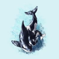 How to draw dolphins, whales and porpoises by LadyAway