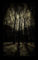 Enter the woods by raun